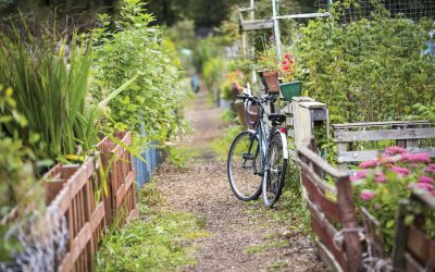 How to start your own allotment from scratch