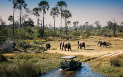 Wild at heart? Experience the awe and magic of an African safari