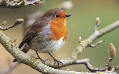 Big Garden Birdwatch: Warmer weather has boosted tiny birds' survival chances