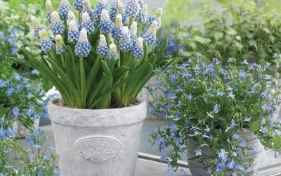 Add zing to your spring! 10 bulbs to buy and plant now