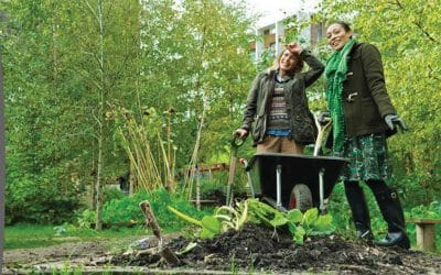 The cream of the crops: Autumn sowing in the veggie patch