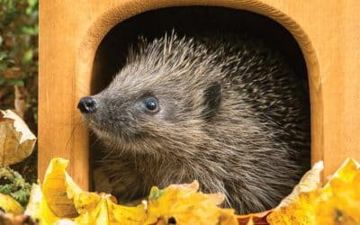 Winter wildlife: How to attract birds, insects and mammals to your garden in winter