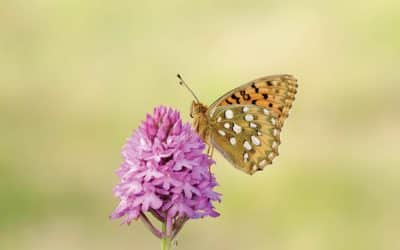 People urged to protect butterflies this spring and boost their mental health