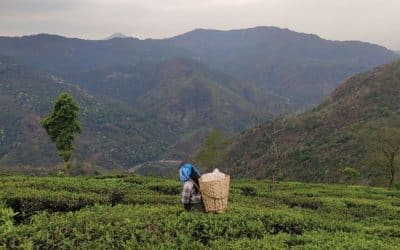 India's Covid outbreak hits tea industry that supplies world's cuppas