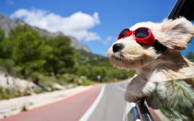 Don't forget your best friend! 7 dog-friendly UK holiday ideas